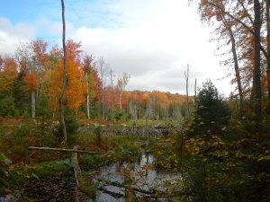 Beaver pond on Sucker Brook trail